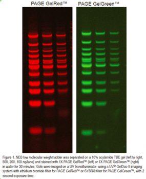 biotium-gel-red-green-02-aug18