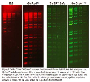 biotium-gel-red-green-web-aug18